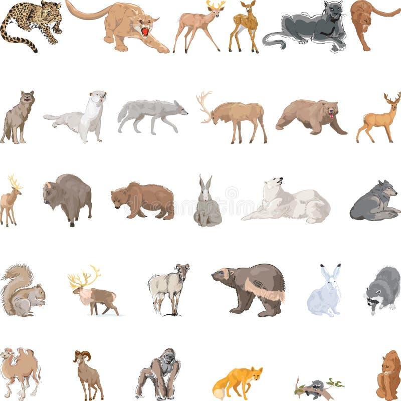 Geplaatste wilde dieren royalty-vrije stock foto's