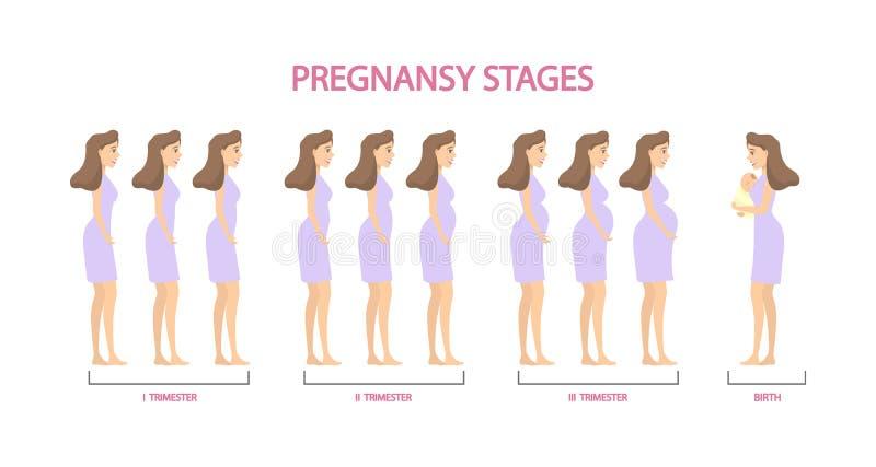 Geplaatste zwangerschapsstadia stock illustratie