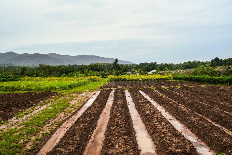 Geplante die percelen op het kweken van groenten en vruchten worden voorbereid stock fotografie