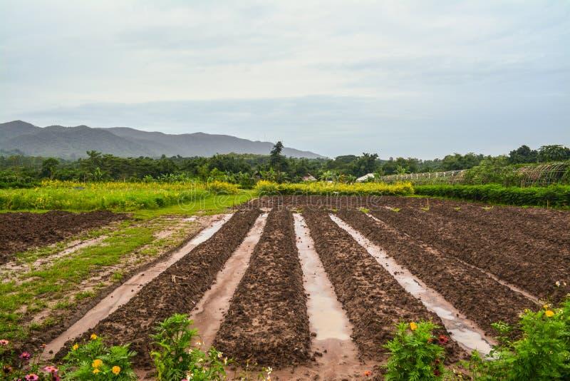 Geplante die percelen op het kweken van groenten en vruchten worden voorbereid stock foto