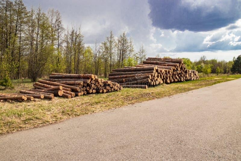Geplante industrielle frische gr?ne Kiefer der Abholzung im Fr?hjahr liegt aus den Grund entlang der Landstra?e stockfotografie