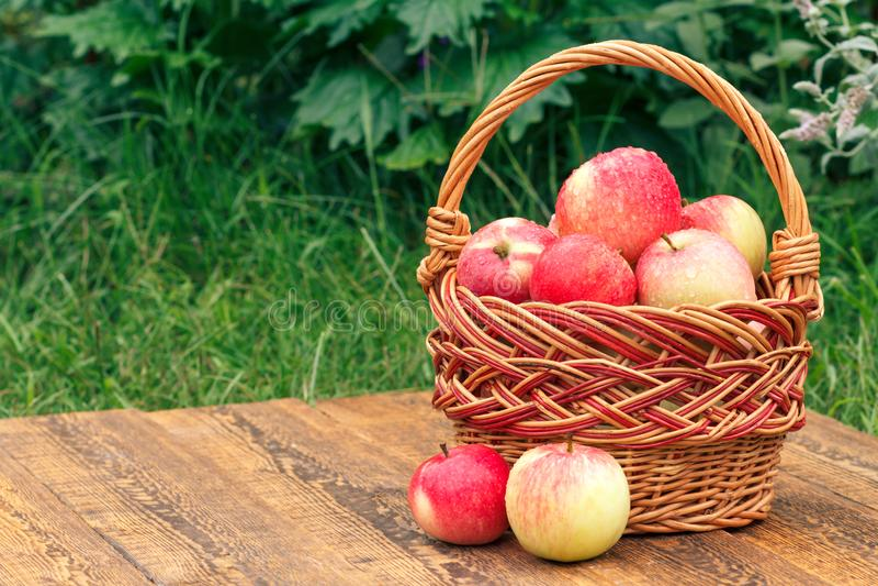 Geplukte enkel appelen in een rieten mand op houten raad met gras op achtergrond royalty-vrije stock foto