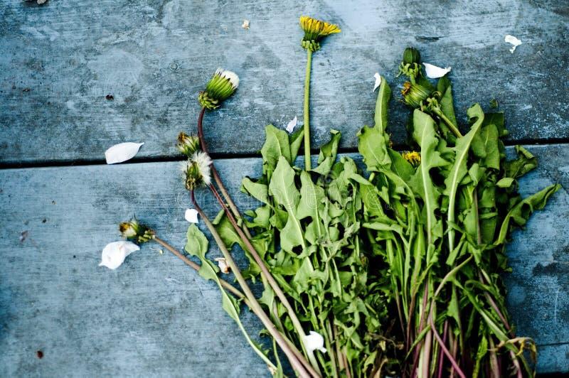 Geplukte paardebloemen stock afbeeldingen