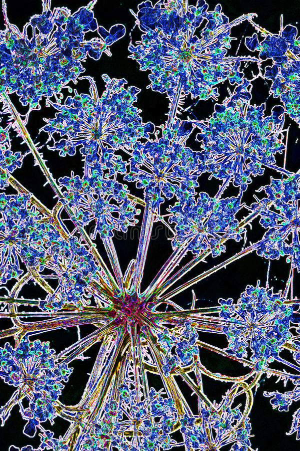Gepresste Blume lizenzfreies stockbild