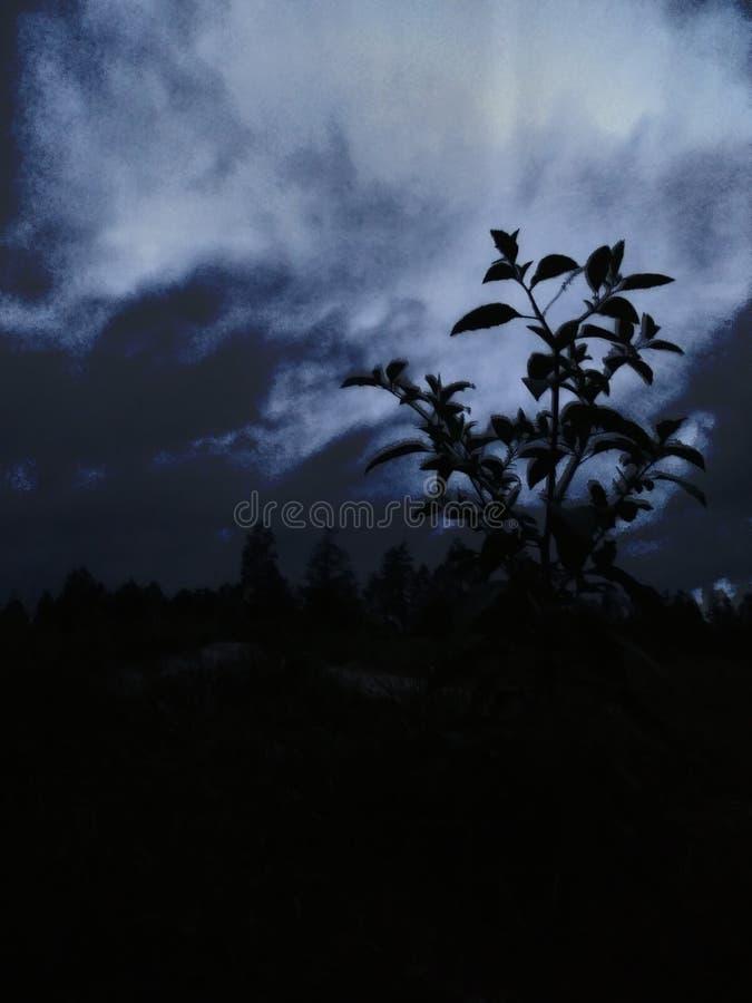 Gequetschte Nacht stockbild