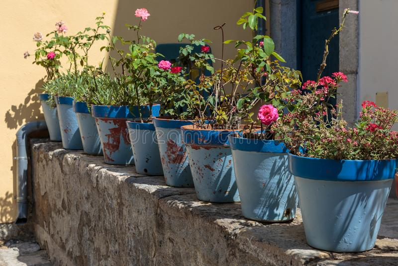 Gerânio vermelho e flores cor-de-rosa das rosas: Plantas dentro dos vasos azuis fotografia de stock royalty free
