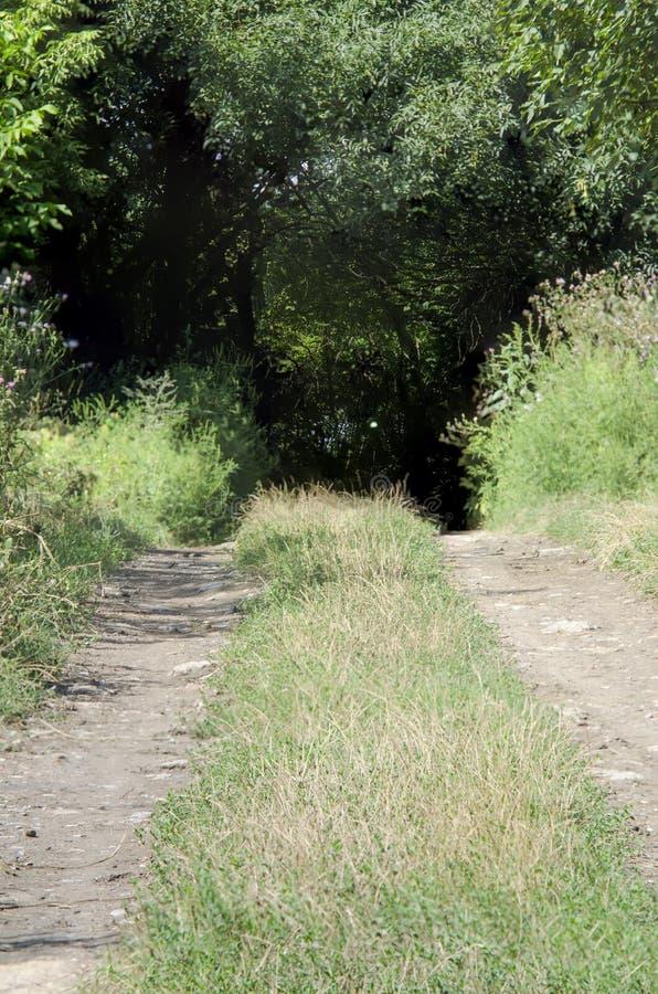 Gerändelte Straße zu einer grünen Waldung stockfotografie