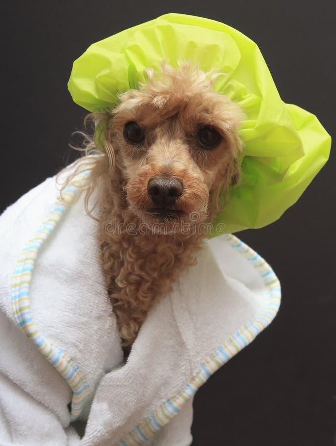 Gerade aus der Dusche heraus stockbild