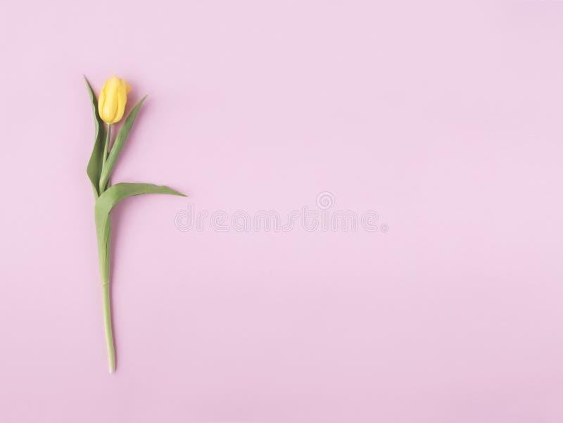Gerade ein geregnet Gelbe Blume auf Pastellrosahintergrund Flache Lage, Draufsicht Minimales Konzept Fügen Sie Ihren Text hinzu lizenzfreies stockfoto