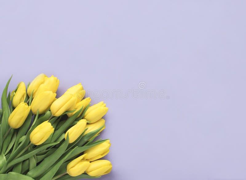 Gerade ein geregnet Gelbe Tulpe blüht den Blumenstrauß, der auf purpurrotem Hintergrund lokalisiert wird Flache Lage, Draufsicht  lizenzfreie stockbilder