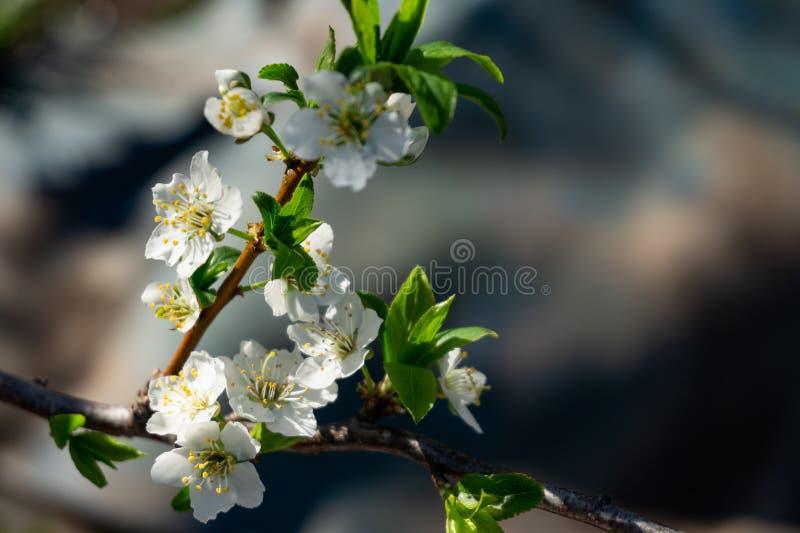 Gerade ein geregnet Schön blühender Baumastabschluß oben stockfotos