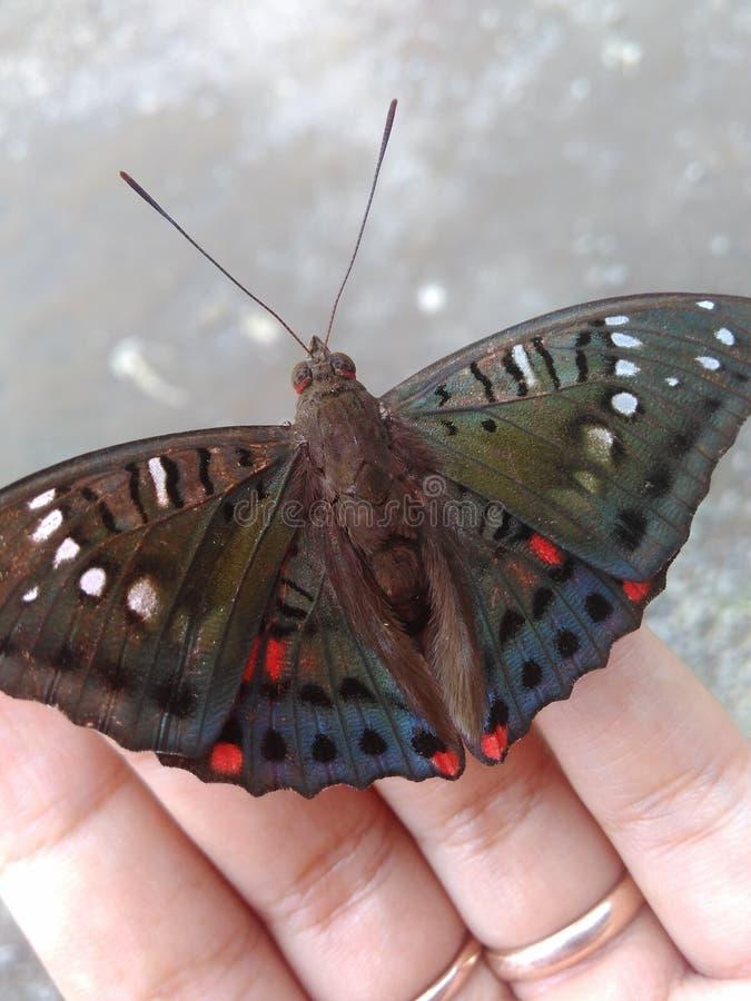Gerade ein kleiner Schmetterling lizenzfreie stockfotos