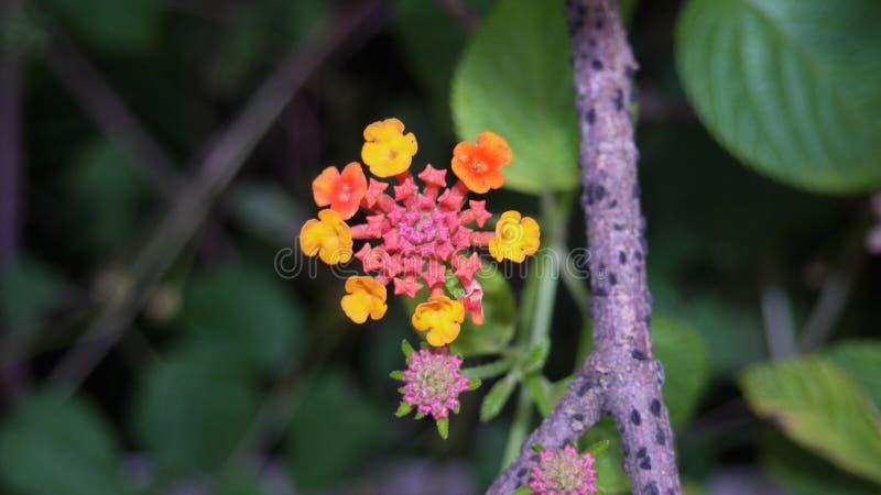 Gerade eine Blume für Sie lizenzfreie stockbilder