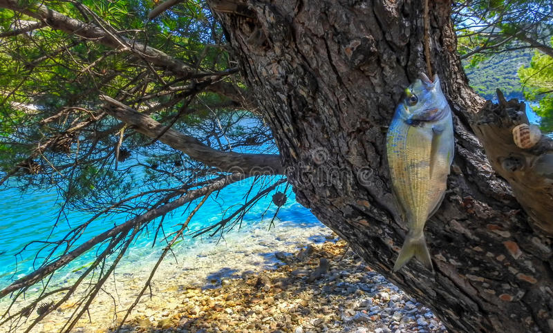 Gerade gefangene Fische 4 stockfotografie