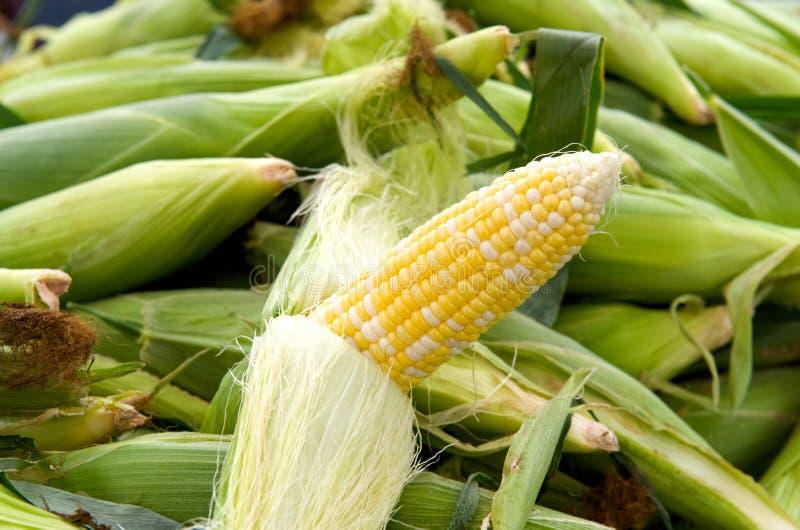 Gerade geschälter Mais stockfoto