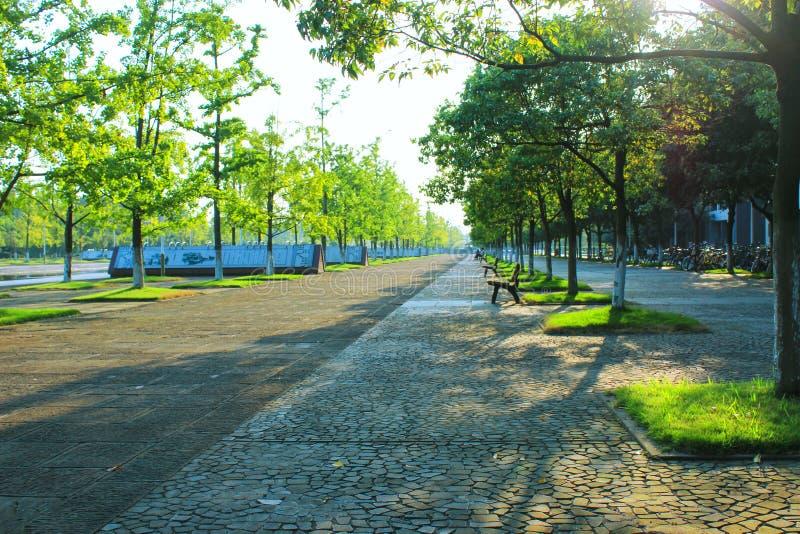Gerade Herbstsaison, im Universitätsgelände Die Straße und die Bäume neben ihr Sonnenlicht gefiltert durch die Bäume Schöner Camp lizenzfreies stockbild
