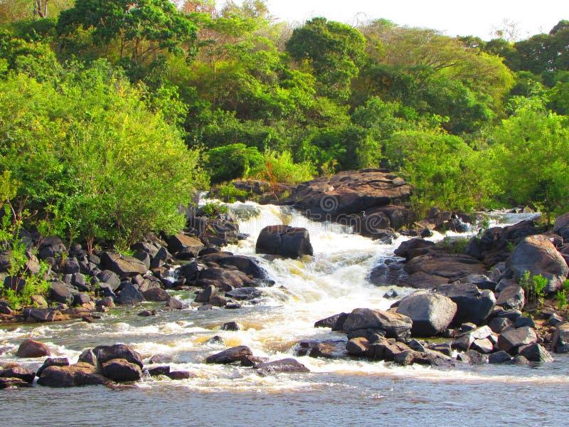 Gerade Natur von Guayana stockbild