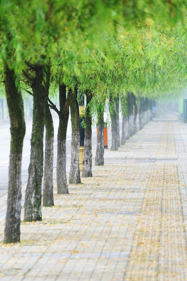 Gerade Straße Mit Weiden Stockbilder