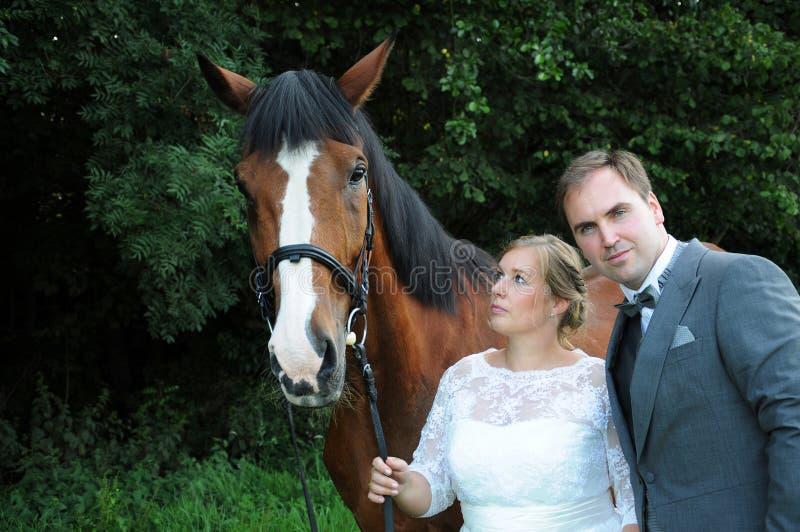 Gerade verheiratetes Paar mit Pferd stockfotos
