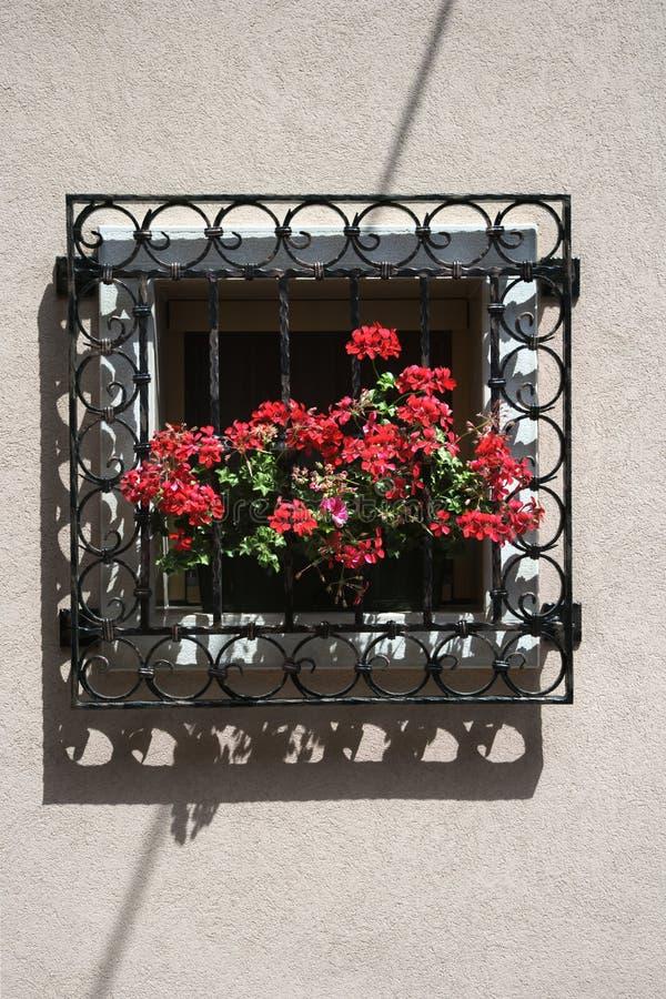 Gerani rossi sul davanzale della finestra fotografia - Davanzale finestra ...