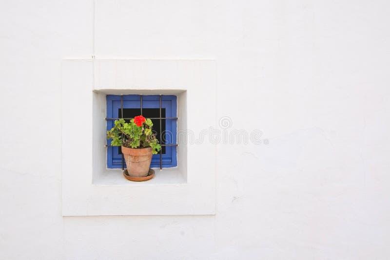 Download Geranio Rojo En Pote De La Terracota Foto de archivo - Imagen de flor, típico: 64212324