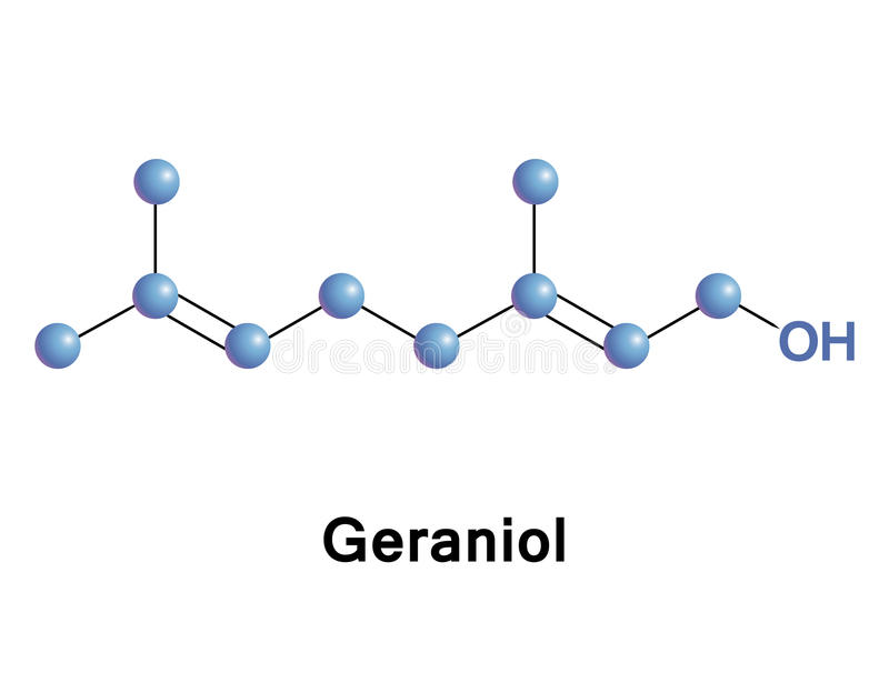 Geraniol is a monoterpenoid and an alcohol. It is the primary part of rose oil, palmarosa oil, and citronella oil. It also occurs in small quantities in royalty free illustration