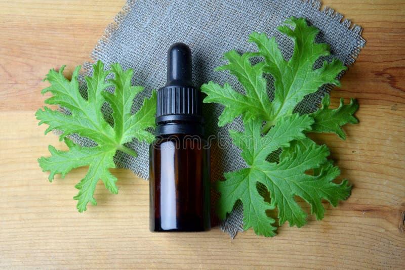 Geranium essential oil Aromatherapy anti mosquito royalty free stock photo