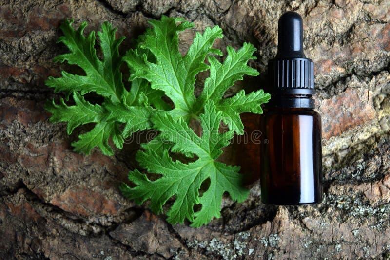 Geranium essential oil Aromatherapy anti mosquito stock images