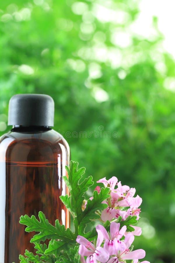 Geranium essential oil stock photos