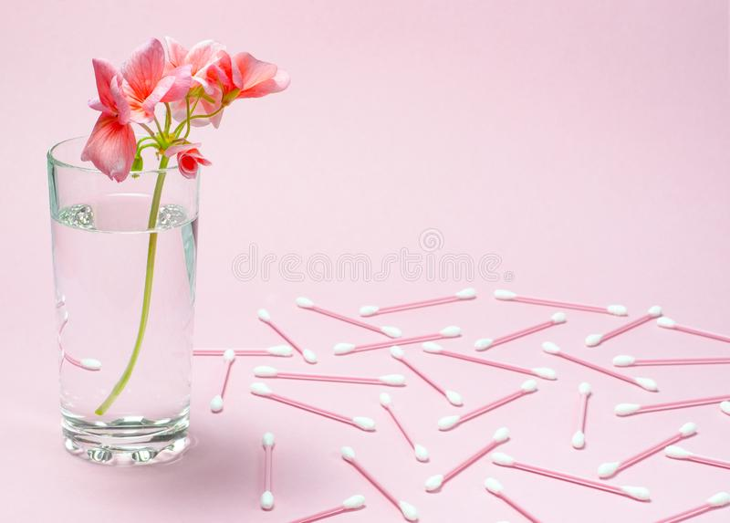 A geranium flower of coral color stands in a glass beaker with clear water against a background of a delicate coral color. Close-up nature beauty leaf white stock photo