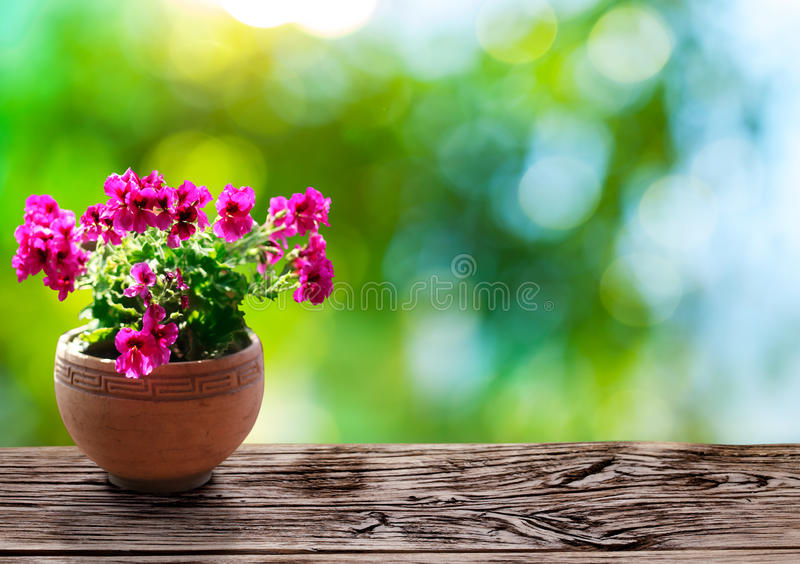Geranium flowers in the crock. Geranium flowers in the crock on the old wooden desk royalty free stock images