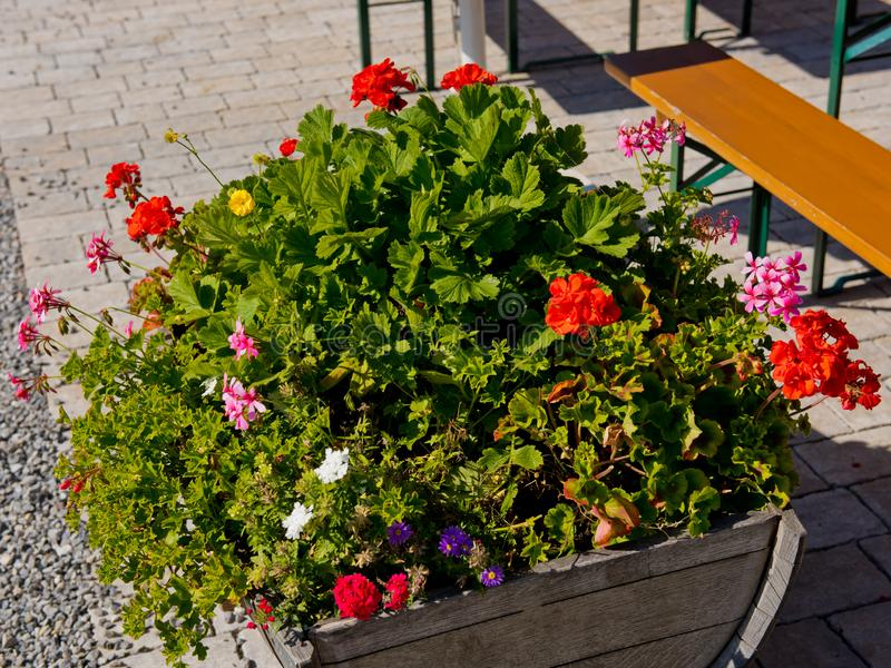 Geranium flowers in a wooden box in street cafe. stock photos