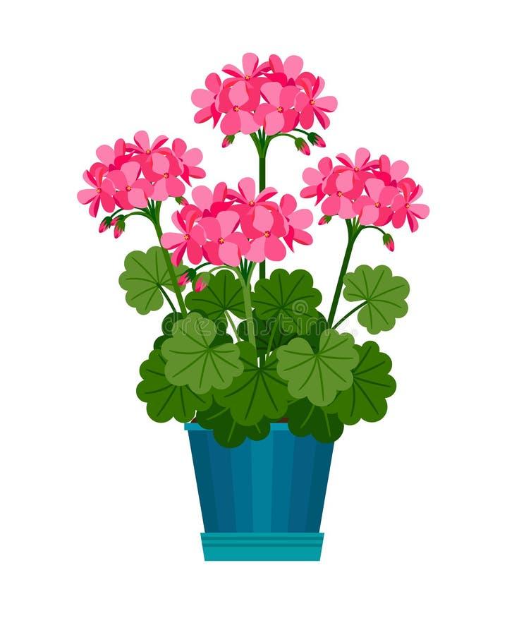 Geranium houseplant in flower pot stock illustration
