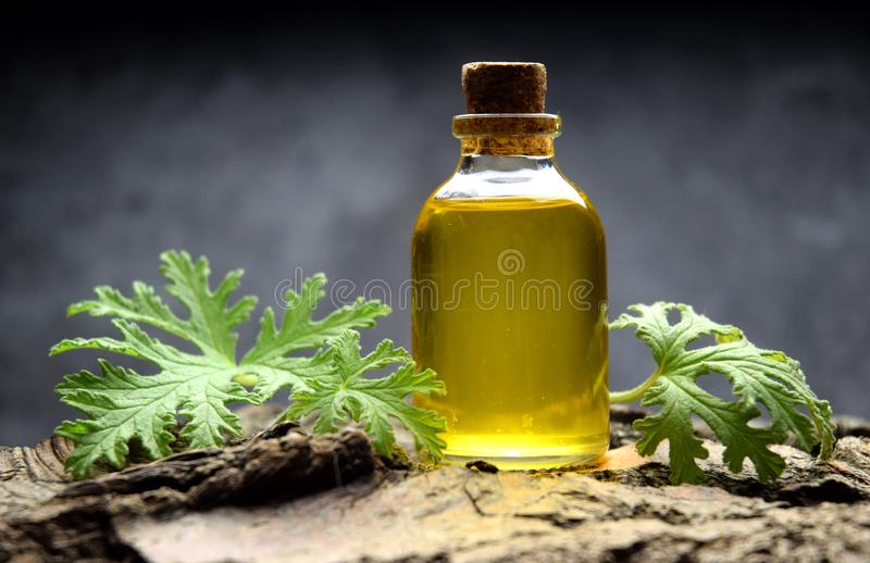 Geranium oil aromatherapy bio organic SPA stock images