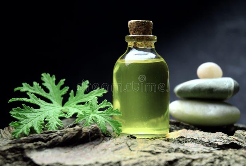 Geranium oil aromatherapy bio organic SPA stock photos