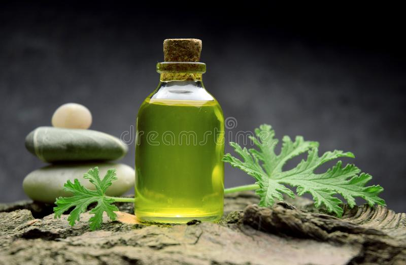 Geranium oil aromatherapy bio organic SPA royalty free stock image