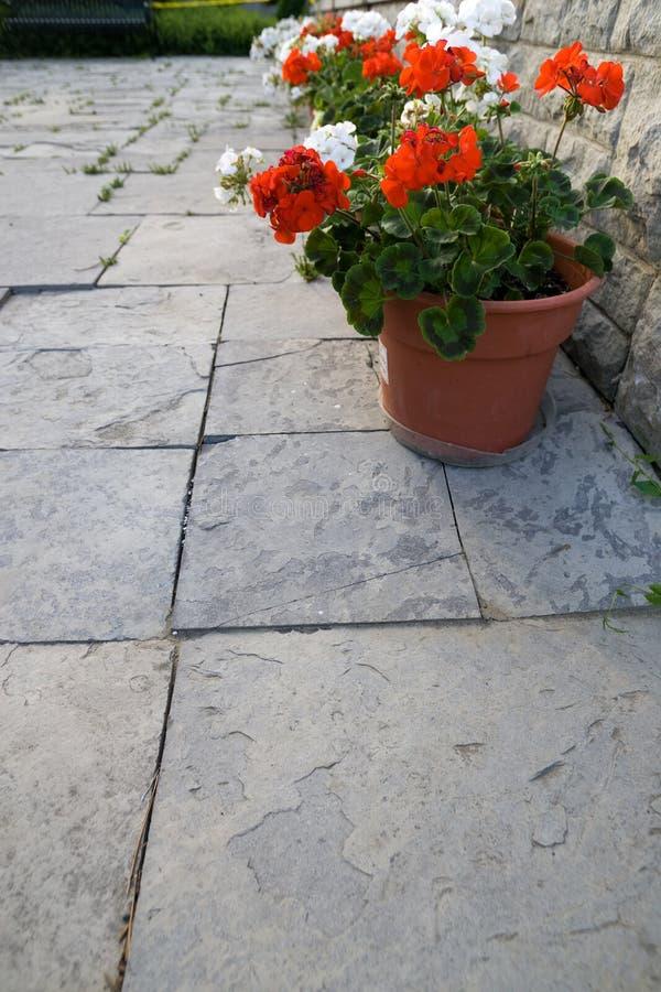 Geranium op steen royalty-vrije stock fotografie