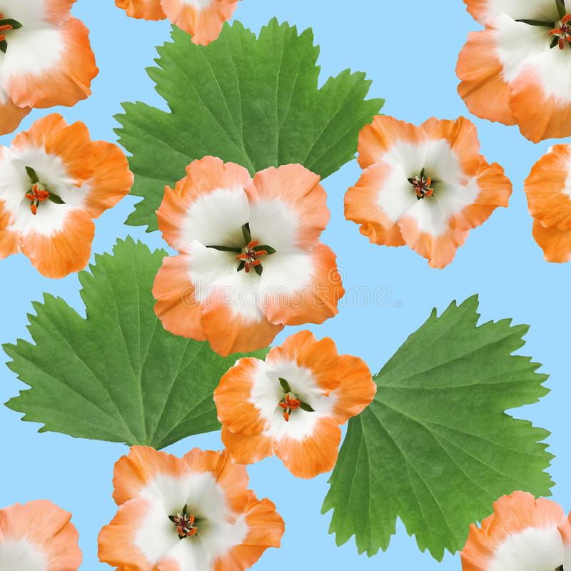 Geranium, pelargonium. Seamless pattern texture of flowers. Floral background, photo collage. Geranium, pelargonium. Texture of flowers. Seamless pattern for vector illustration