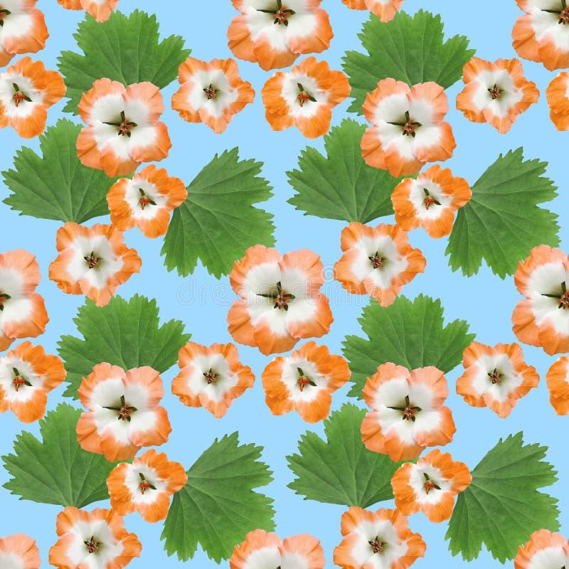 Geranium, pelargonium. Seamless pattern texture of flowers. Floral background, photo collage. Geranium, pelargonium. Texture of flowers. Seamless pattern for stock illustration