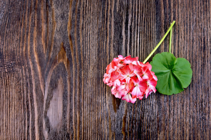 Geranium pink with leaf on board royalty free stock images