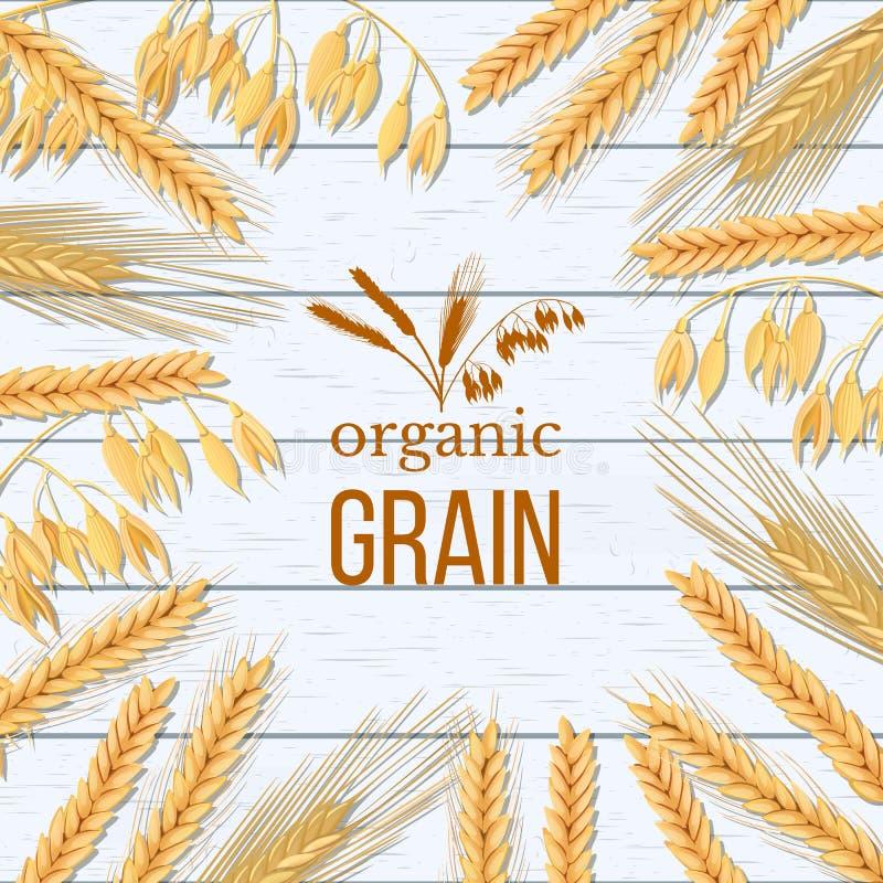 Gerbe de blé, d'orge, d'avoine et de seigle sur le fond en bois blanc Épillets de céréales avec le grain organique d'oreilles, de illustration libre de droits