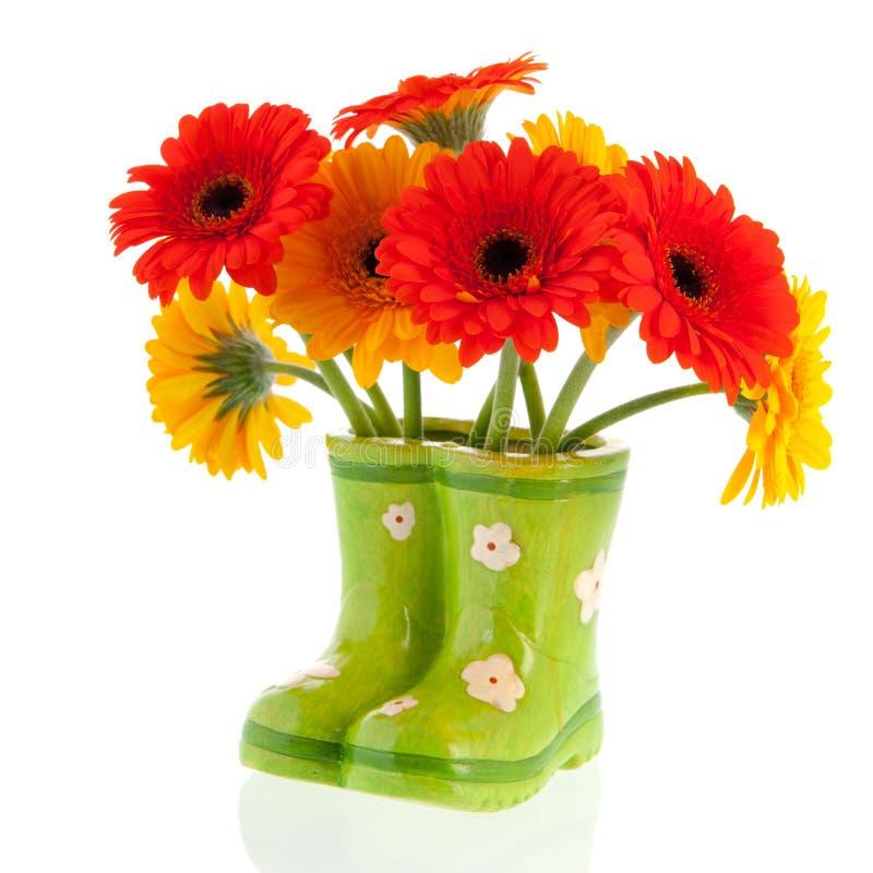Gerber-Blumen in den grünen Stiefeln stockbilder