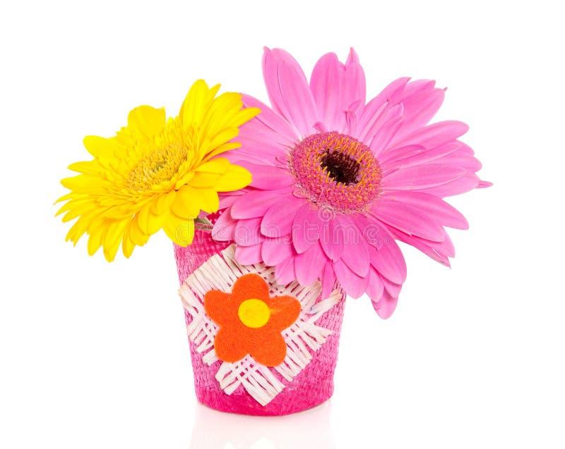 gerber Blumen in einem kleinen Vase lizenzfreies stockfoto