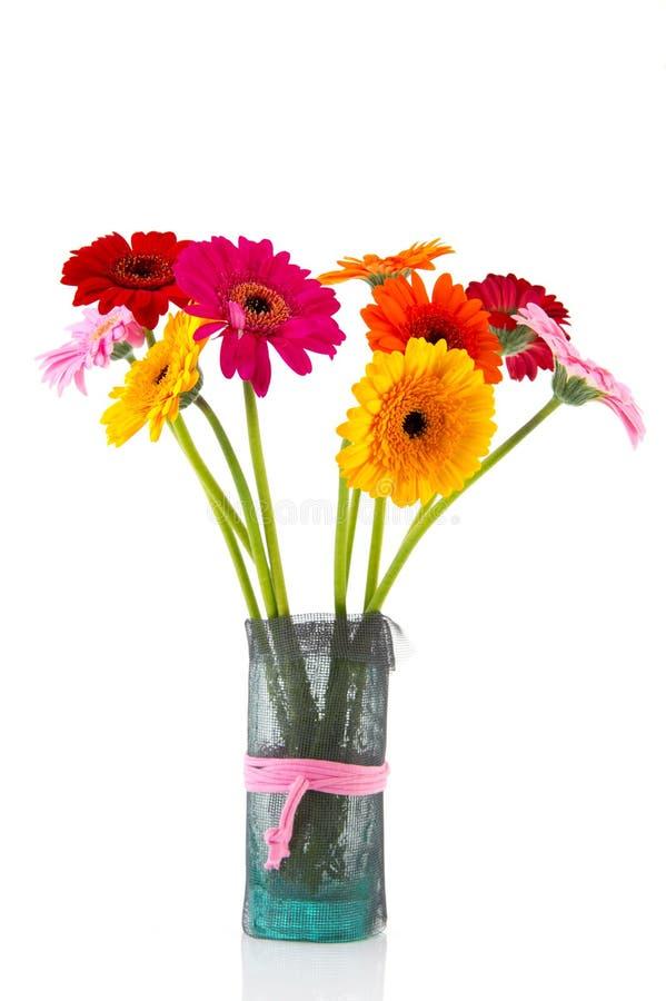 Gerber-Blumen im Vase stockfotos