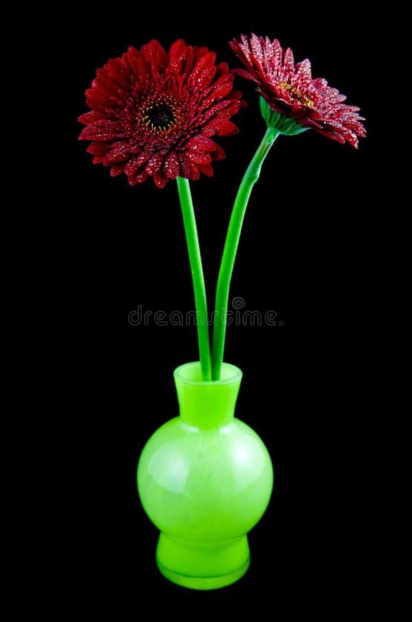 Gerber de deux rouges dans le vase vert photos stock