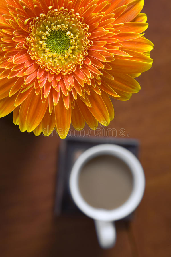 Gerber et café images stock