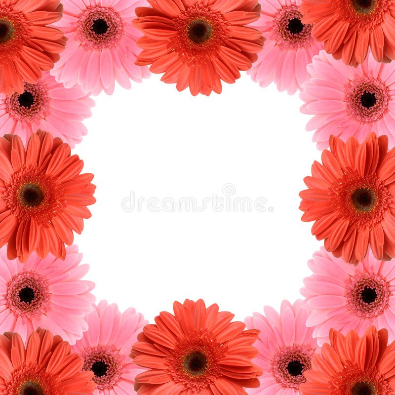 Gerber flower frame royalty free stock photo