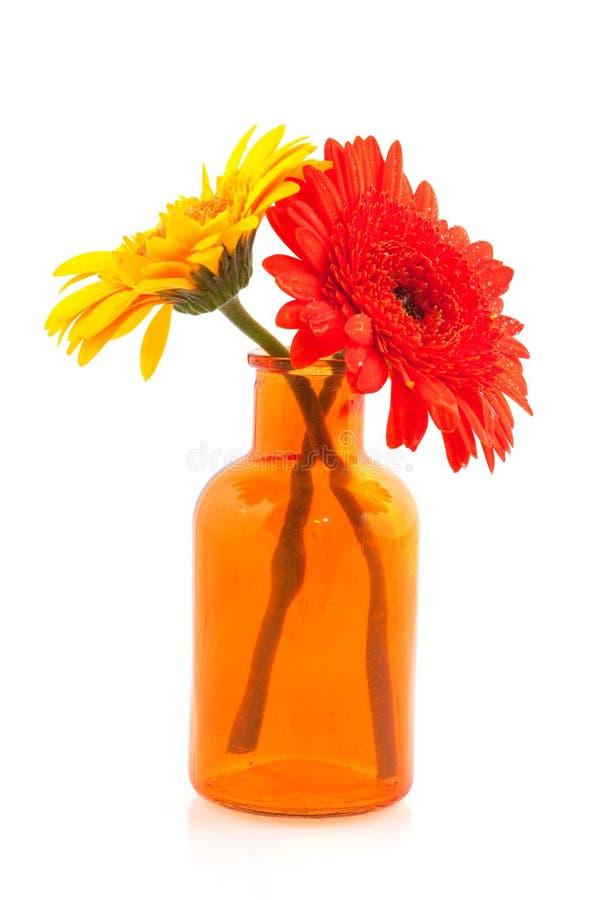 Gerber jaune et orange photographie stock libre de droits