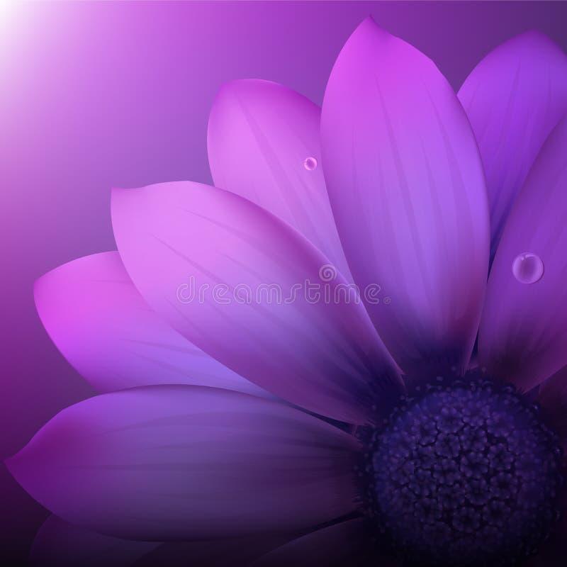 Gerber violeta libre illustration