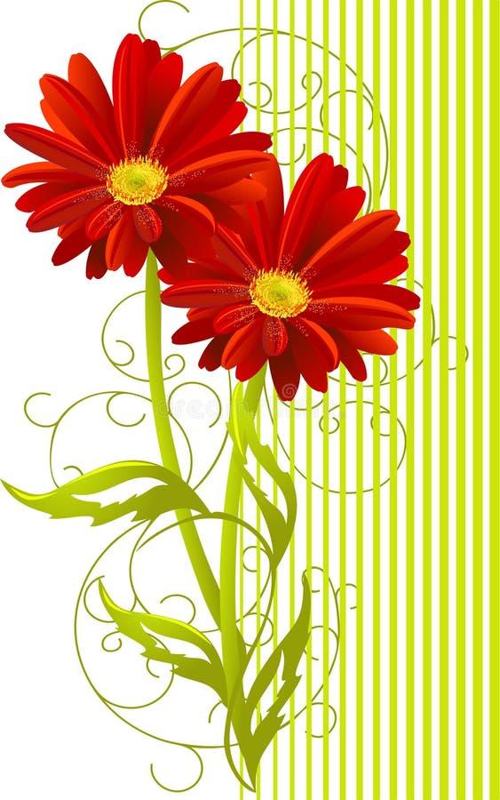 gerbera δύο λουλουδιών ανασκόπησης απεικόνιση αποθεμάτων